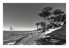 WALD (herbert thomas hesse) Tags: hth dars wald darswald nationalpark boddenlandschaft ostsee westküste sw bw monochrome