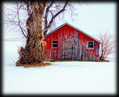 Red Shed (Dave Linscheid) Tags: winter snow tree cold butterfield watonwancounty minnesota vignette square smartphotoeditor