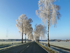02.01.2020 (.rog3r1) Tags: huaweip30pro kirchlinteln winter germany niedersachsen
