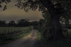 Lights in the Dark (Netsrak) Tags: eifel eu europe europa natur nature tree baum bäume trees wald forest light licht outdoor outside landscape landschaft green grün darkness dark dunkel
