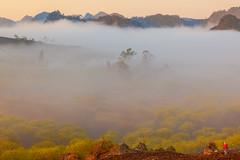 _MG_8260.0212.Tân Lập.Mộc Châu.Sơn La (hoanglongphoto) Tags: fog foggy thickgloom misty haze mists mist thickfog hoanglongphoto canoneos5dmarkii mộcchâu sơnla vietnam việtnam northvietnam northernvietnam vietnamlandscape scenery vietnamscenery mocchau landscape morning nature asia asian northwestvietnam naturelandscape mocchaulandscape sky vietnammountainouslandscape forest theforest earlyfrost earlymorningfog fogofmocchau sươngmùmộcchâu tâybắc tânlập sươngmù núi mountain phongcảnhthiênnhiên canonef24105mmf4lisusm sươngsớmmộcchâu people landscapeandpeople người phongcảnhcóngười sunshine sunny morningsunshine buổisáng nắng nắngsớm plumblossom hoamận hoamậnmộcchâu đồihoamận earlysunshine minimalisme tốigiản