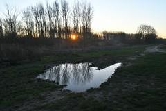Broekpolder Vlaardingen (Hugo Sluimer) Tags: broekpolder broekpoldervlaardingen deruigte vlaardingen natuur nature natuurfotografie natuurfotograaf naturephotography zuidholland holland nederland nikon nikond500 d500 sunset zonsondergang