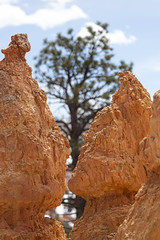 rock fornication. (explored) (stevenbley) Tags: brycecanyonnationalpark park brycecanyon nationalpark snow land sand dirt utah trees bryce canyon america