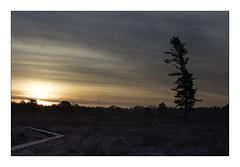 Sunrise (Theo Bauhuis) Tags: zonsopgang wooldseveen ochtend ochtendrood pinetree pine sunrise peat moor achterhoek winterswijk natuurmonumenten