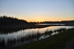 Broekpolder Vlaardingen (Hugo Sluimer) Tags: broekpolder broekpoldervlaardingen deruigte vlaardingen natuur nature natuurfotografie natuurfotograaf naturephotography zuidholland holland nederland nikon nikond500 d500