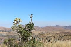 Mpumalanga Mountainside (Rckr88) Tags: mpumalanga southafrica south africa mountainside mpumalangamountainside mountains mountain cliff cliffs greenery green grass veld travel travelling trees tree nature naturalworld outdoors