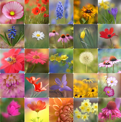 Flower Power... (KissThePixel) Tags: collage flower flowers macro nature bokeh bokehlicious friday flickr flickrfriday beautiful collection photography nikon nikondf nikond750 50mm nikkorf12 nikkor50mmf12 70200mm sigma70200mm f28 f12 f14 sigma nikkor garden summer spring love beauty