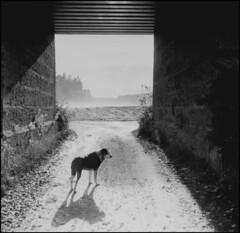 Isa (jo.sa.) Tags: analog hund schwarzweiss analogefotografie schwarzweissfotografie brücke landschaft licht schatten bw sw monochrom fomapan400 6x6 rollfilm rodinal mittelformat ab