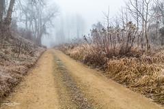 Der Weg (AnBind) Tags: morgenfrost meinegegend orte donauauen au morgennebel 2020 morgen kremsanderdonau krems