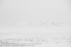 Winterlandschaft in Island (Agentur snapshot-photography) Tags: 04014000 17000000 berg berge bergig bus cold danger dangerous environment europa europe ferðalag gefahr gefahren gefährlich hætta iceland isl island isländisch kalt kälte landscape landschaft landschaften landschaftsaufnahme lava lavafeld mosfellsheiði mountain mountains reise reisen schnee schneefall schneeflall schneegestöber schneeschauer schneesturm schneetreiben sehenswürdikeiten snow temperatur temprature þingvellir thingvellir thingvellirnationalpark tourism tourismus travel traveling umhverfi umwelt veður vulcano wandergebiet wandern weather wetter wetterbild wetterbilder wettergefahren wi winter winterkälte winterlandschaft winterwetter wirtschaft höfuðborgarsvæðið