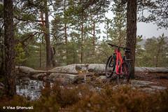 Mountain biking (VisaStenvall) Tags: canon eos 6d 50mm f14 sigma espoo eestinlaakso eestinkallio finland suomi nöykkiö red woods bike bicycle water autumn bokeh dof tree