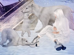 ooph! (Tympany) Tags: livalle rkkn kmh genus shisposes white albino snow winter polarbears bears cub babybear denim jeans sweater shock lol cute amusing secondlife bento avatar stompers boots oops