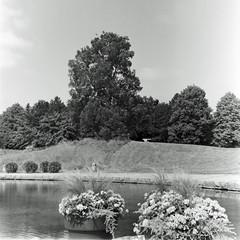 Berlin Britzer Garten 10.7.2019 (rieblinga) Tags: berlin berg britzer garten baum wasser blumen 1072019 rollei slx ilford hp5 sw adox fx 39 ii