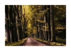 colorwood (Zino2009 (bob van den berg)) Tags: wood forest entrance wald path forbidden secret color manipulated nik enchanted weird leaves whispering strange dogo stay holland close