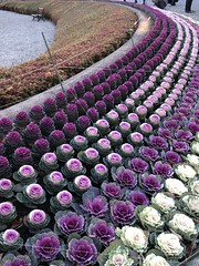 in rows (Hayashina) Tags: japan garden tokyo bench curve flowerbed