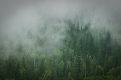 Rolling Fog (SNAPShots by Patrick J. Whitfield) Tags: plant summer light detail dof trees wild life outside nature green lines details britishcolumbia canadianrockies bc rain wet cloudy landscapes patterns texture gloomy eerie