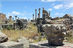 On se rapproche de la Basilique Judiciaire et du Capitole (philippedaniele) Tags: maroc volubilis vestigesromains basilique capitole