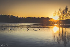 Reflections on the New Year (Irina1010) Tags: lake acworth sunset reflections water trees gees birds nature sky golden yellow canon outstandingromanianphotographers coth5