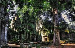 Siem Reap K - Ta Prohm 46 (Daniel Mennerich) Tags: siemreap cambodia khmer angkor canon dslr eos hdr hdri spiegelreflexkamera slr