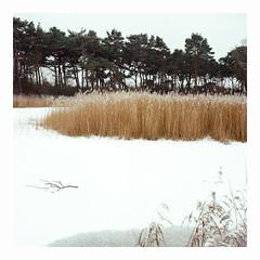 Local Pond 2019 - Kodak Ektar 100 (magnus.joensson) Tags: sweden swedish skåne january snow frost rolleiflex carl zeiss tessar 75mm kodak ektar 100 exp 6x6 medium format c41