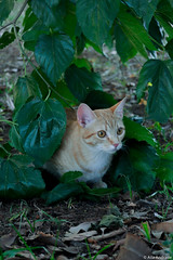 Nala (aila.andrade) Tags: ensaio parque cat arlivre gato nikon job photograph photo animais