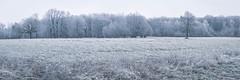 Raureif und Nebel im Taunus (markusgeisse) Tags: winter raureif nebel bäume wiese taunus dusk hoarfrost kälte cold blue entsättigt panorama