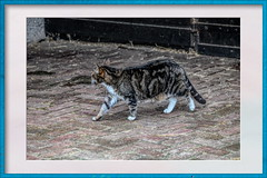 Cat at the stable (gill4kleuren - 20 ml views) Tags: pussy puss poes chat mieze katje gato gata gatto cat pet animal kitty kat pussycat poezen mouse moments hair eyes little jong young katze minou gatta kater photo weer weather day kiity cloudy storm wind rain forcast humidity visibility colors yoga bad sky