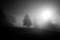 s u n (Toni_V) Tags: m2402923 rangefinder messsucher leica leicam mp typ240 type240 28mm elmaritm12828asph hiking wanderung randonnée jurahöhenweg fog nebel mist gegenlicht backlight bw monochrome blackwhite schwarzweiss sun switzerland schweiz suisse svizzera svizra europe ©toniv 2019 191230