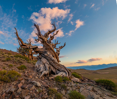 When The Sun Goes Down Over The Eastern Sierra. The Shadows Come Quik in The White Mountains