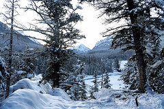 Bow River Bridge (Anthony Mark Images) Tags: beautiful bowriver bowriverbridge banff alberta canada christmas2019 morning snow snowcoveredtrees mountains rockymountains canadianrockies lovely winterscenery winterlandscape winter nikon d850 flickrclickx sunrise
