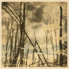 Appleton (LowerDarnley) Tags: washi washipaper goldleaf winter trees baretrees swamp reflection clouds appletonfarms ipswich ma alternativedigitalprint printmaking