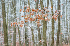 Raureif und Nebel im Eichenwald (AnBind) Tags: waldhof motive meinegegend nebel winter orte raufreif jahreszeit 2020 wald egelsee