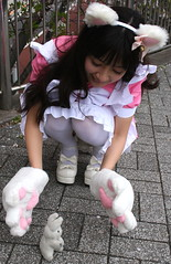 Precious And Cute (emotiroi auranaut) Tags: cat bunny rabbit paws song love