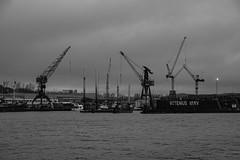 "Cranes (Rudi Pauwels) Tags: project365 3366 gotheniusvarv 3652020 sweden schweden gothenburg sverige goteborg gothiariver 29120 ""120in2020"""