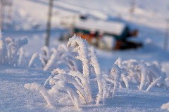 hard frost 1 (one_man's_life) Tags: hardfrost hoaryfrost magichour alsoranforthe366 43120