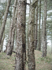 (Neil Bryce) Tags: anglesey llanddwyn newborough beach forest sand dunes olympus trees woodland