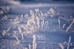 hard frost 2 (one_man's_life) Tags: hardfrost hoaryfrost magichour alsoranforthe366