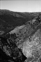 A view of Estrela Highland (lebre.jaime) Tags: portugal beira estrelahighland landscape rock trees forest analog film135 bw blackwhite noiretblanc nb pb pretobranco ptbw ilford fp4 iso125 leicam3 summicron2050dr epson v600 affinity affinityphoto
