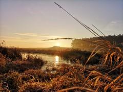 Morgens (bianca 11) Tags: morgensonne sonnenaufgang naturmoment schönerplatz dezember mv mecklenburgvorpommern deutschland
