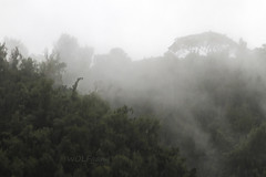 Christmas Rains (karl.wolfgang (Appalachian Son)) Tags: christmas hawaii oahu rain fog mountain weather psalm bible holiday