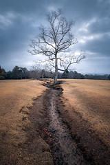 Yggdrasil (Gift of Light) Tags: nara japan narapark tree winter grass nature landscape cloud cloudy light shadow vertical travel sony sonyalpha alpha sonya9 a9 sonyfe1635mmf28gm fe 1635mm 163528 281635 f28 gm