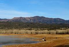 The Colors of Winter (Patricia Henschen) Tags: brushhollow swa statewildlifearea penrose colorado mountain mountains winter clouds trees cattle cows rural countryside lake reservoir ice