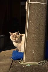 猫 (Architecamera) Tags: color snap cat animal d750