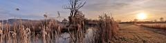 FROSTY MORNING 20191231_090915 (2) (hlh 1960) Tags: nature natur landschaft landscape panorama fluss river blies tree baum schilf gras ufer himmel sky sun sunrise sonne sonnenaufgang sol soleil atardecer frost frosty kalt cold winter
