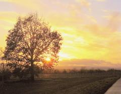 O, Wunder groß, Marien Schoß (amras_de) Tags: wiesbaden dotzheim imhimmelreich himmelreich abend vespre vecer aften evening vespero ilta vespere sera vesper vakaras avond kveld seara forenicht kväll aksam sonnenuntergang escureixito ocàs soumrak solnedgang sunset ocaso päikeseloojang auringonlasku coucherdesoleil zalazaksunca tramonto soloccidens saulelydis riets zonsondergang soleglad zachódslonca pôrdosol apus scurata dayset západslnka solnedgång