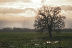 Defying the weather (Zoom58.9) Tags: sky clouds tree trees field weather nature landscape outside europe germany himmel wolken baum bäume feld wetter natur landschaft draussen europa deutschland brandenburg sony sonydscrx10m4