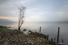 A silent witness (Through_Urizen) Tags: category landscape longexposure places sapanca turkey canon canon90d sigma1020mm lake water landscapephotography tree autumn pastelcolours clouds sunglow mountains fence shore shoreline pebbles stones