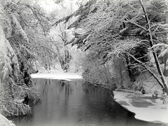 The East Branch of the Escanaba in Heavy Snow (yooperann) Tags: black white snow trees open river upper peninsula michigan