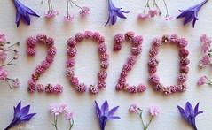 Rolling in 2020 with Knolling.....Smile on Saturday ! (Lani Elliott) Tags: flowers patterns colour colourful pretty lanisflowers lanielliott whitebackground macro upclose closeup bokeh knolling 2020 happysmileonsaturday light bright