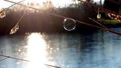 waiting for... (S.Garten) Tags: sunrise earlymorning sunbeams momentofsilence water mysticlight ilovenature magicmoments nature icebubbles niceplaceforreflect freezing thebeautyofnature soapbubbles